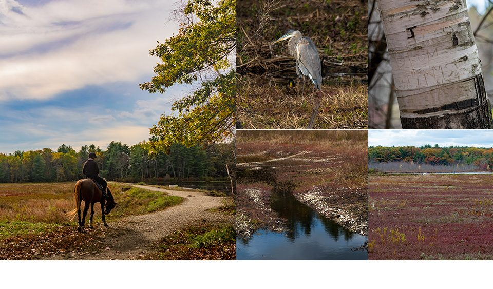 Carlisle Cranberry Bog