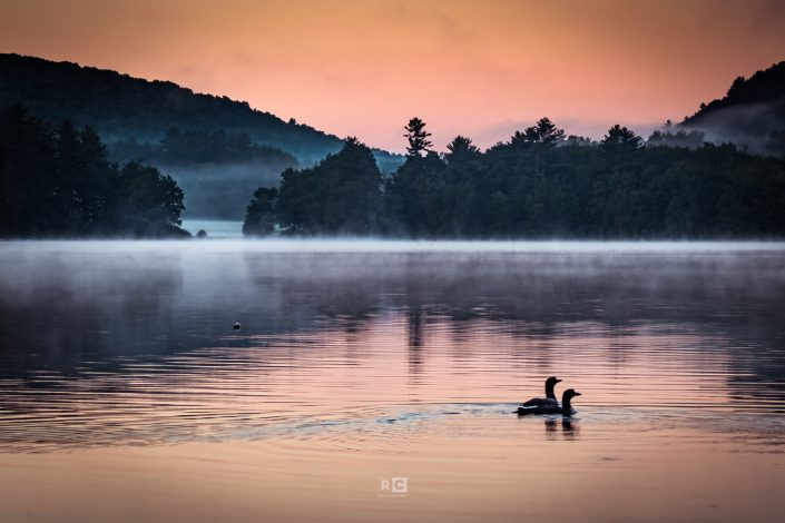 Loons starting their day on Clemons Pond