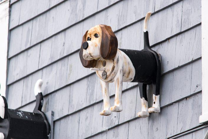 Doggie Bird feeder