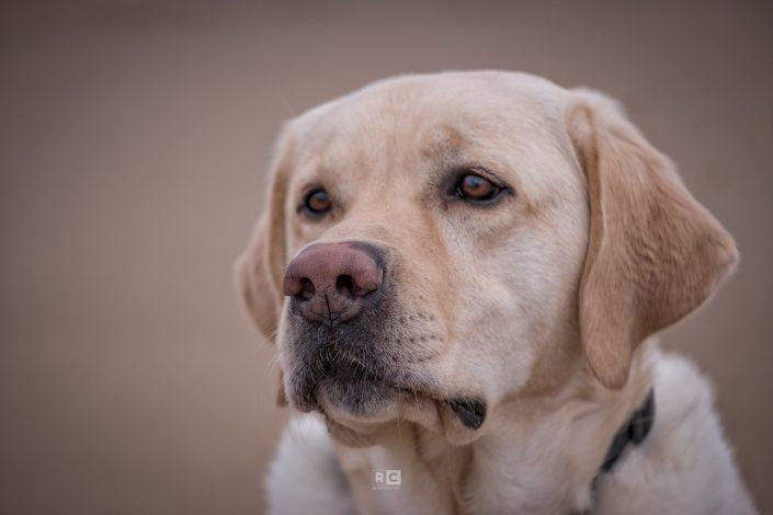 Portrait of Toby