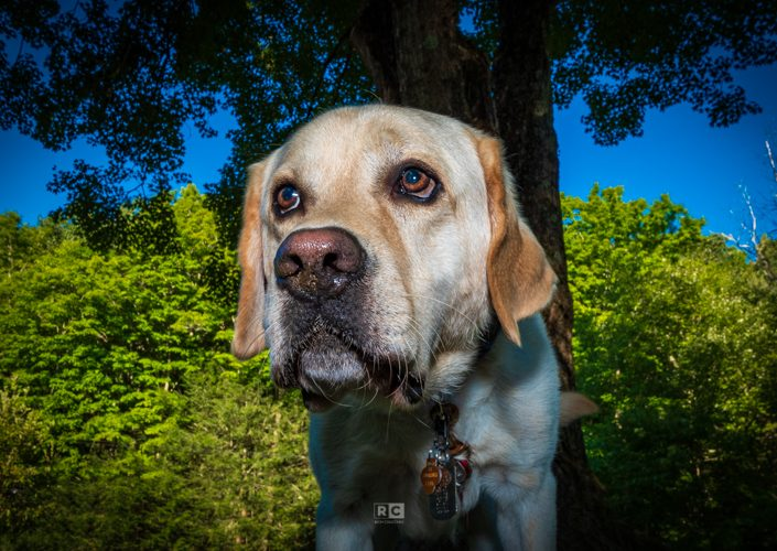 2019 National Dog Day – Toby
